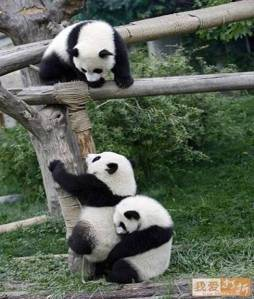 pandas-helping-each-other